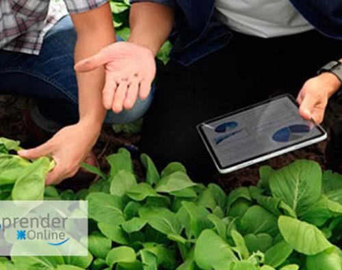 Programa de Formación en Producción Agropecuaria